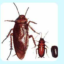 رش الصراصير 0535952610 مكافحة حشرات ,رش مبيد حشرات ,مكافحة الصراصير الصغيره